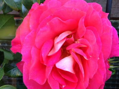 brothers-grimm-rose-5