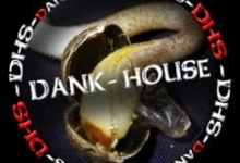 Photo of Dank House Seeds