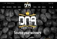 Photo of DNA Genetics cannabis seeds review