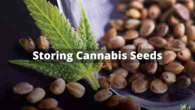 Photo of Storing Cannabis Seeds for years