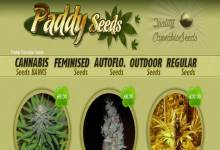 Photo of Paddy Seeds Review