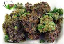 Photo of Eight things to consider before growing your own marijuana