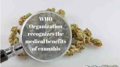 Photo of The World Health Organization recognizes the medical benefits of cannabis