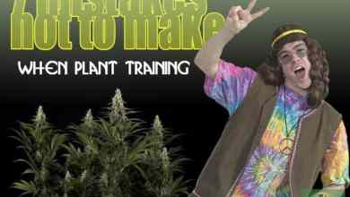 Photo of 7 mistakes not to make with plant training