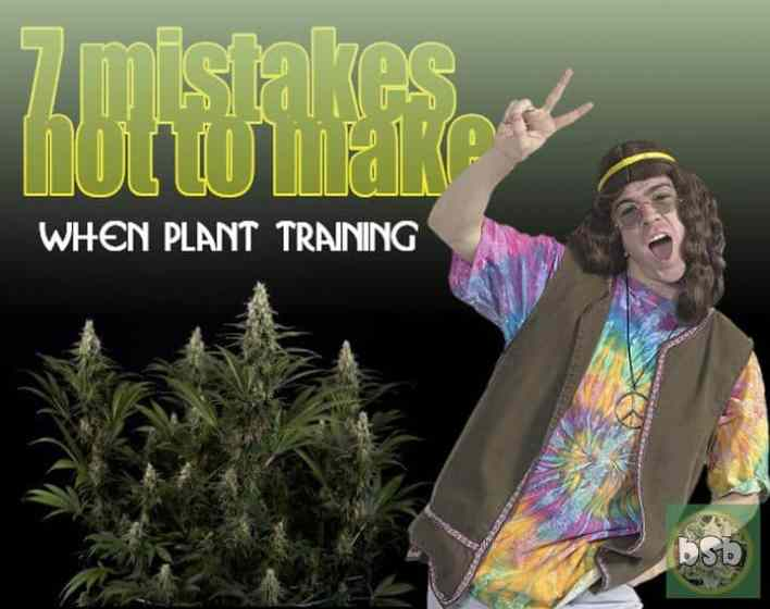 7 mistakes not to make with plant training
