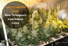 Photo of Get 1 Gram Per Watt 6 Tips To Improve Your Indoor Grow