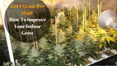 Photo of Get 1 Gram Per Watt 6 Tips To Improve Your Indoor Grow