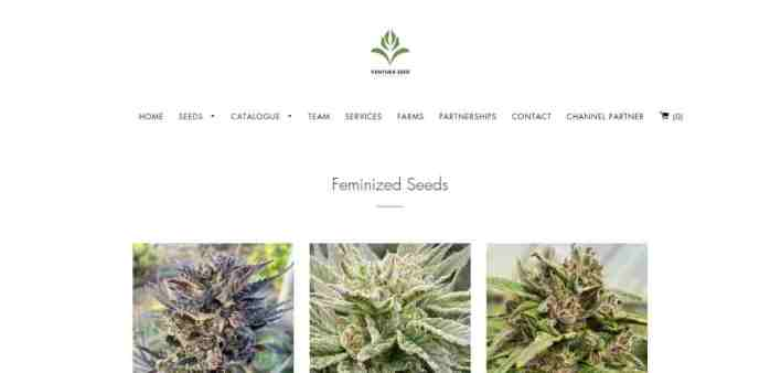ventura seed company review