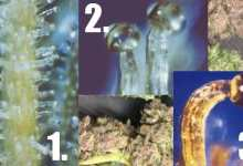Photo of Three things you should know about trichomes