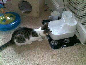 another cat using the cat mate water dispenser