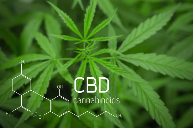 Photograph of cannibas plant with CBD graphic overlay
