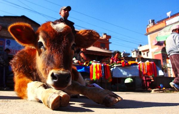 Kathmandu street scene. Picture by antlyz