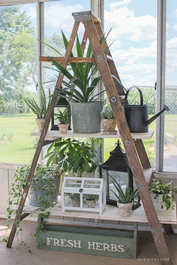 Hanging House Easy Plants