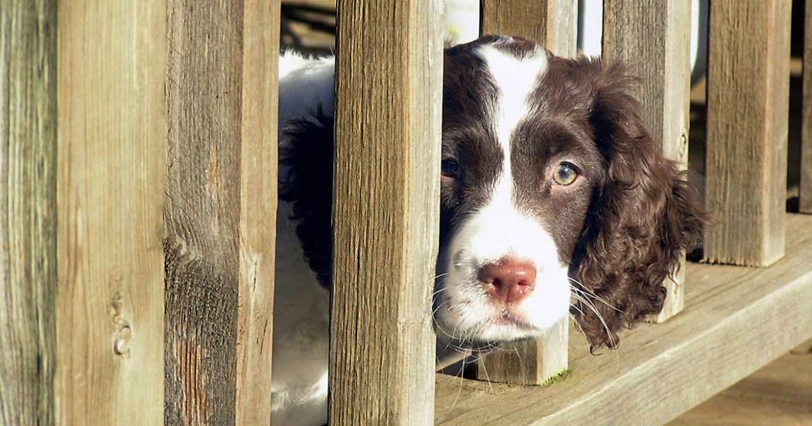 Trixie peeking through rails