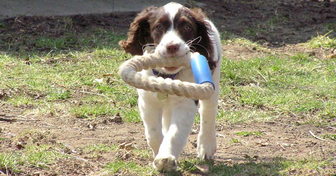 Trixie with rope