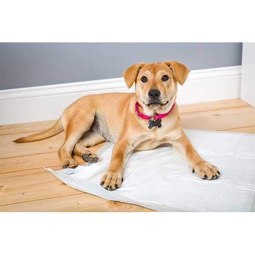 Best Cooling pad for dog Buying Guide