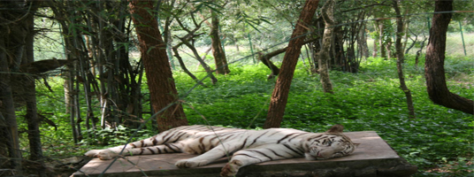 Bandhavgarh park tourist places in bangalore