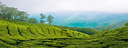 murikkady tourist places in idukki