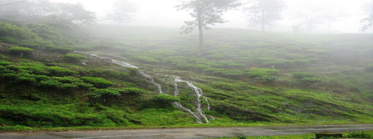 peermede tourist places in idukki