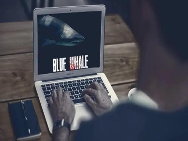 blue whale curator