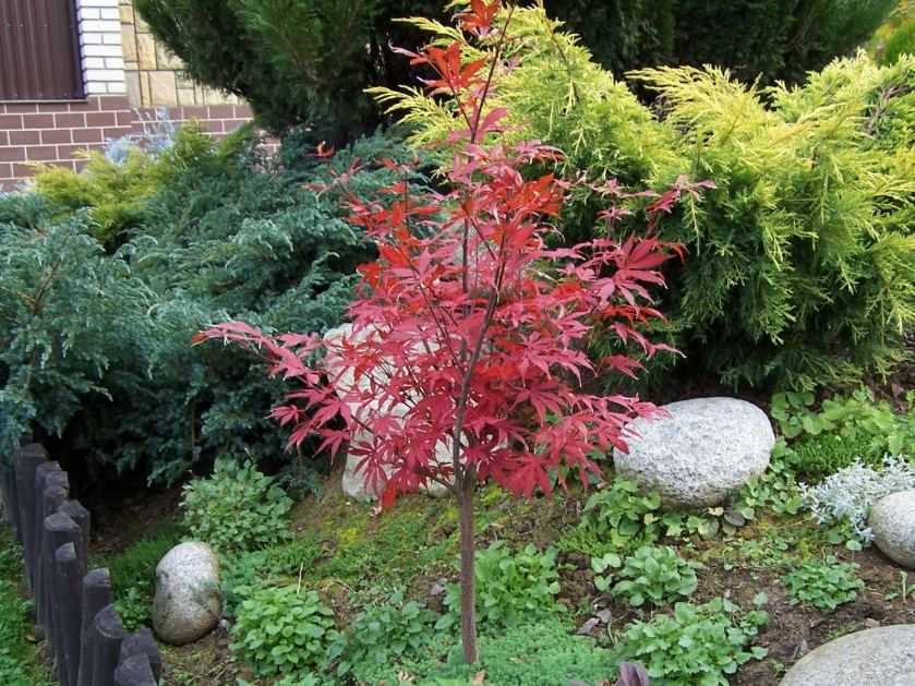 Best Trees To Plant For Small Yards