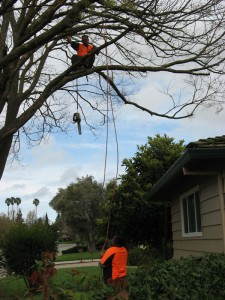 tree removal licensed