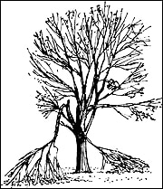 Caring For Your Trees After A Storm