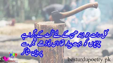 kaal raat jo endhan kay liye kat kay gira hai - parveen shakir poetry in urdu - besturdupoetry.pk