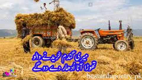 meri gandam khareednay walo