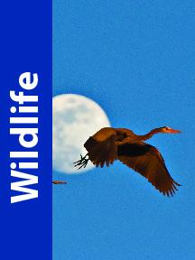 Wildlife Visual Adventure Website Button