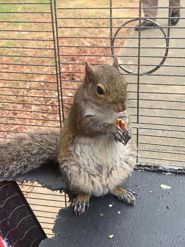 The squirrel has since been released into the wild. Credit: Limestone County Sheriff's Office