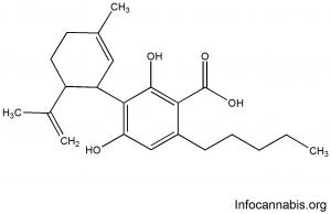 Ácido Cannabidiólico (CBDA)