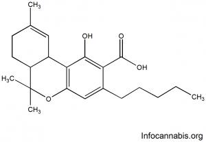 Ácido Tetrahidrocannabinólico (THCA)