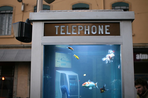 phone booth aquarium by nicolas nova at flickr