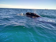 We were this close to whales
