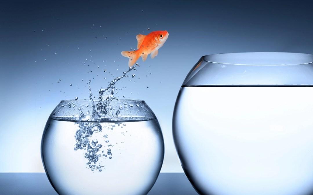 fish jumping into a bigger bowl