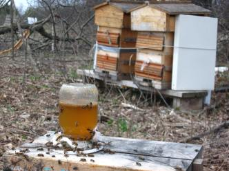 chamomile honey syrup: a spring boost for hungry bees.