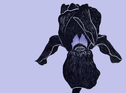 black_iris2