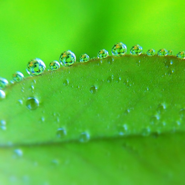 Drops on a leaf macro