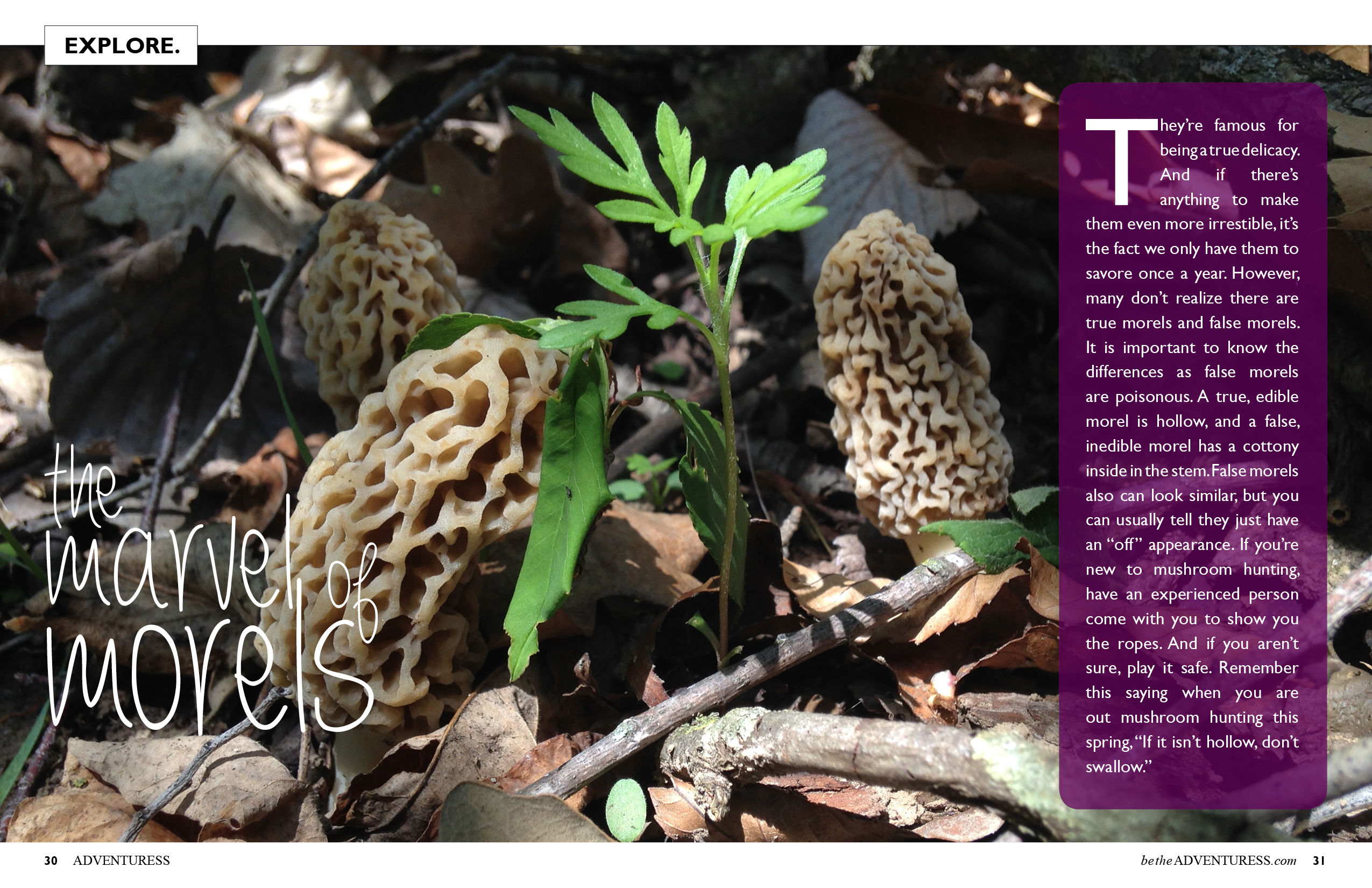 The Marvel of Morels