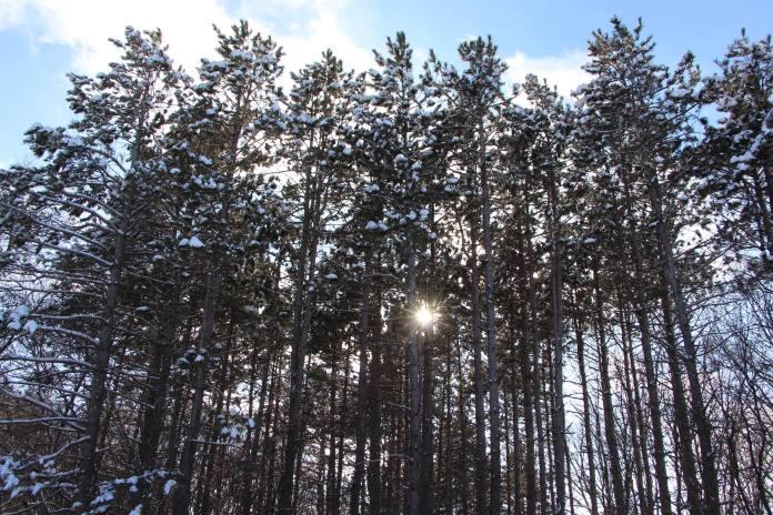 28461210_Schmidt_Trees