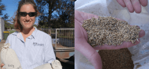 Sydney University Plant Breeding Institute Narrabri & Bethel Farm Mill {Triticale Adventure}
