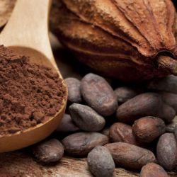 cacao powder - dark