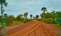 The road to Konteh