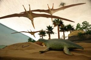Hays Sternberg Museum dinosaurs flying Nov 2009