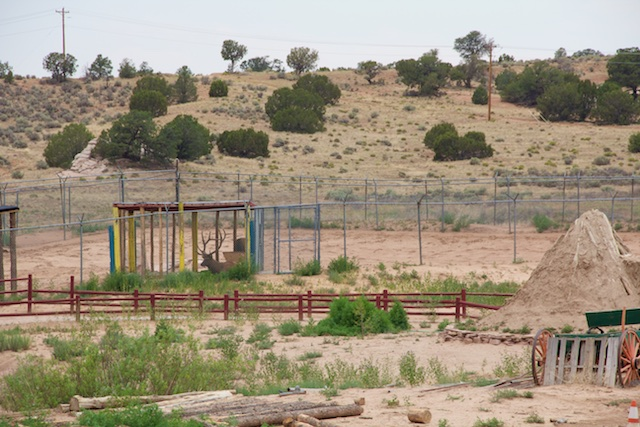 Elk enclosure at Navajo Nation Zoo, with hogan on the right, 2013