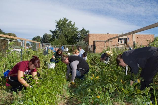 Weeding at McGlone Elementary for Groundwork Denver, Sept 2014 IMG_8172