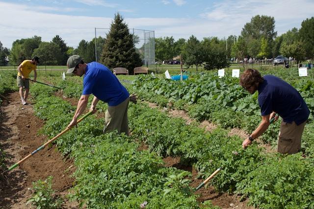 EKAR Farm July 19, 2015 3