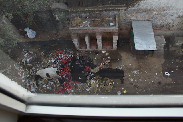 Taj Mahal Pandya Niwas Hotel public urinal Agra Dec 2015
