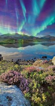 northern lights plants